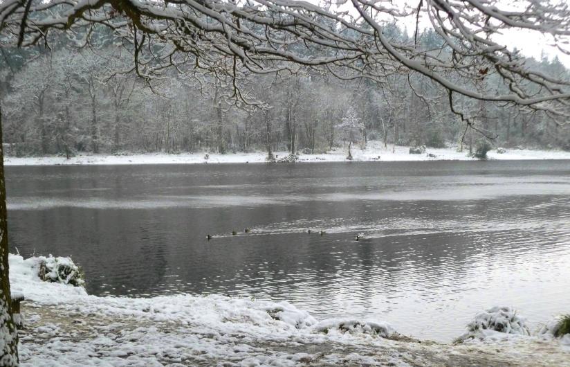 sheerwatersnow2013