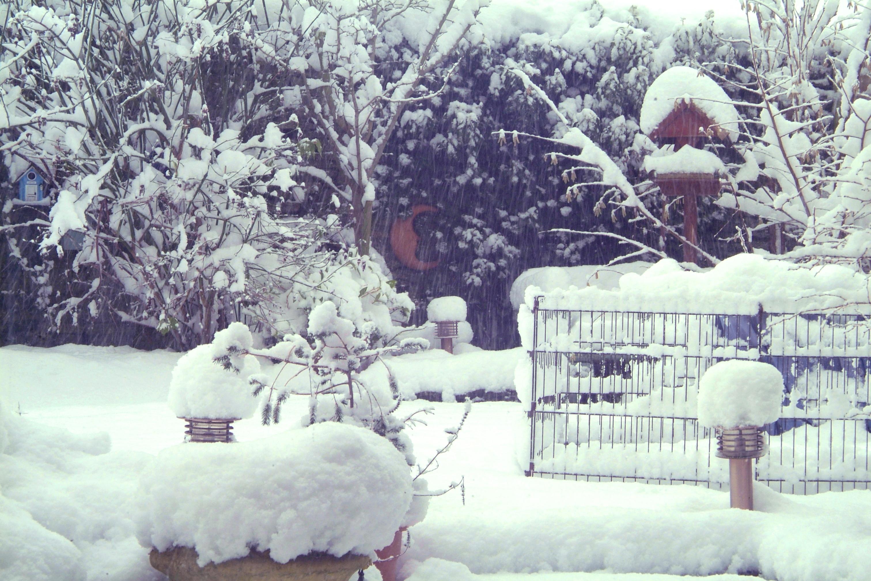 Snow Garden Feb 19 01